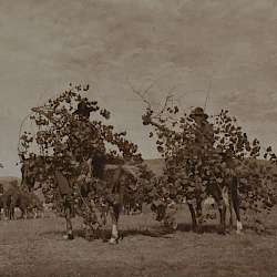 Boughs for the altar (Cheyenne) (1911)