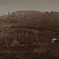 Sweat-lodge frame (Cheyenne) (1910)